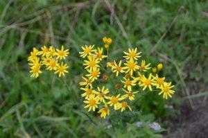 flower-429526_1920