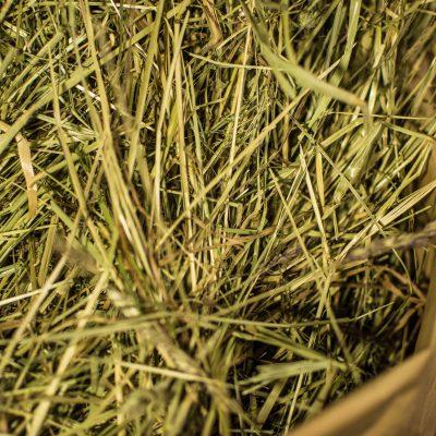 Kerniges Wiesen-Heu vom Weitfeldhof, mit viel Struktur, gut für Zahnabrieb, Nährstoffversorgung und Struckturfutter. Direkt aus unserer Scheune, direkt vom Bauernhof